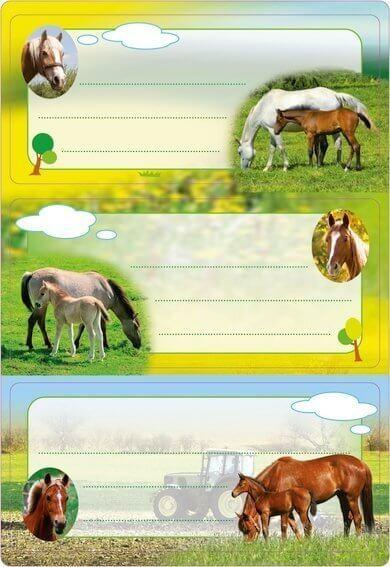 HERMA 5568 10x Schuletiketten Pferde beglimmert