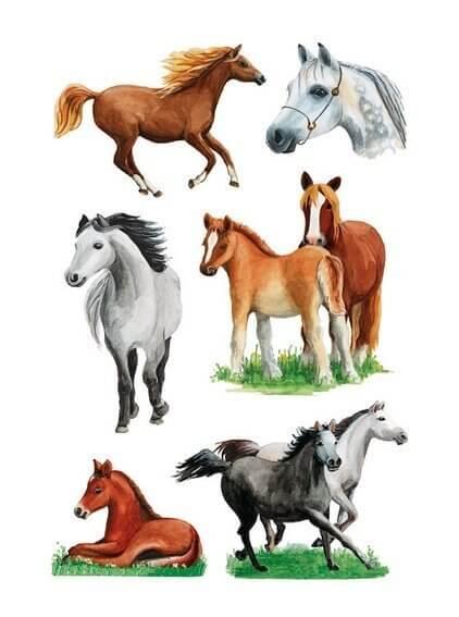 HERMA 3553 10x Sticker DECOR Pferderassen