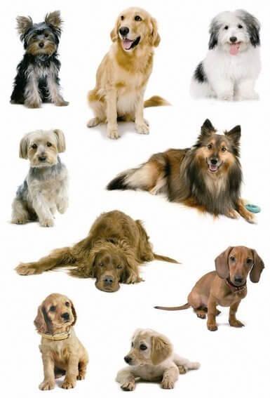 HERMA 3432 10x Sticker DECOR Hundefotos