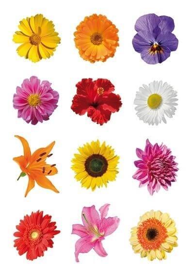 HERMA 3309 10x Sticker DECOR Bunte Gerberas